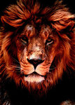African Lion Face Close Up Mini A2 Paper Poster
