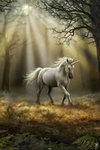 Anne Stokes - Glimpse of The Unicorn -  Maxi Paper Poster