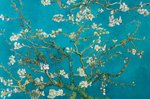 Laminated - Van Gogh Almond Blossom - Giant Poster