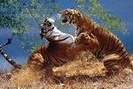 Tigers Fighting - Maxi Paper Poster