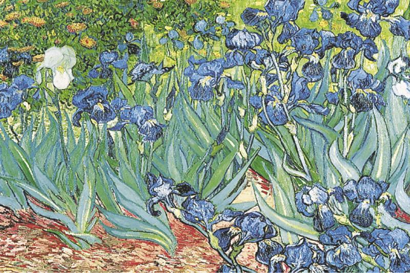 Vincent Van Gogh - Iris Maxi Paper Poster - Camden Town Poster Company