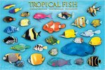 Tropical Fish - Maxi Paper Poster