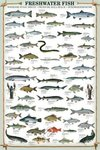 Freshwater Fish - Maxi Paper Poster