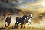 Horses Stampede Brown Maxi Paper Poster