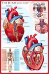 The Heart - Maxi Paper Poster