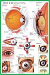 The Eye - Maxi Paper Poster
